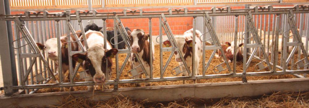Stalleinrichtung für Rinder und Pferde